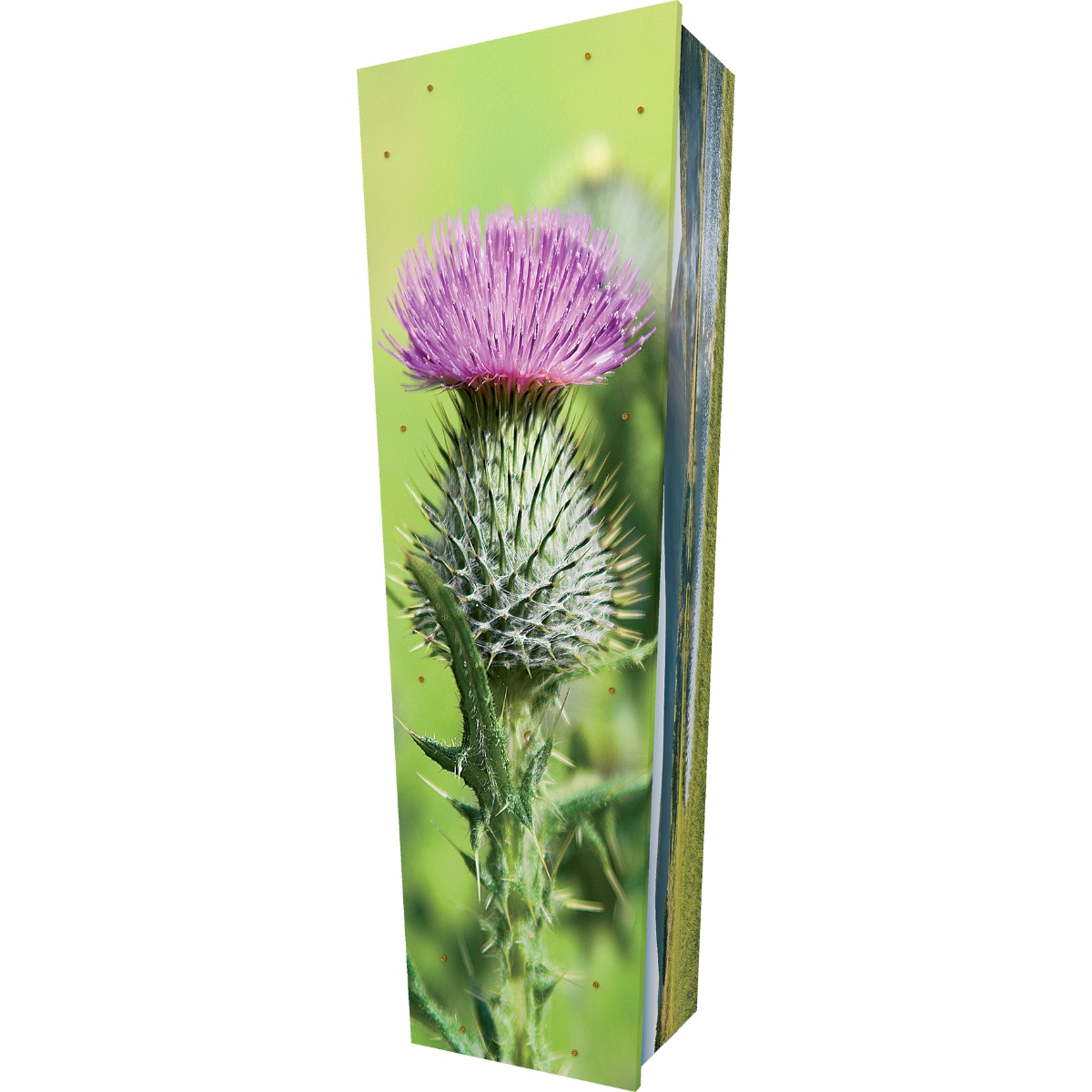Thistle Coffin