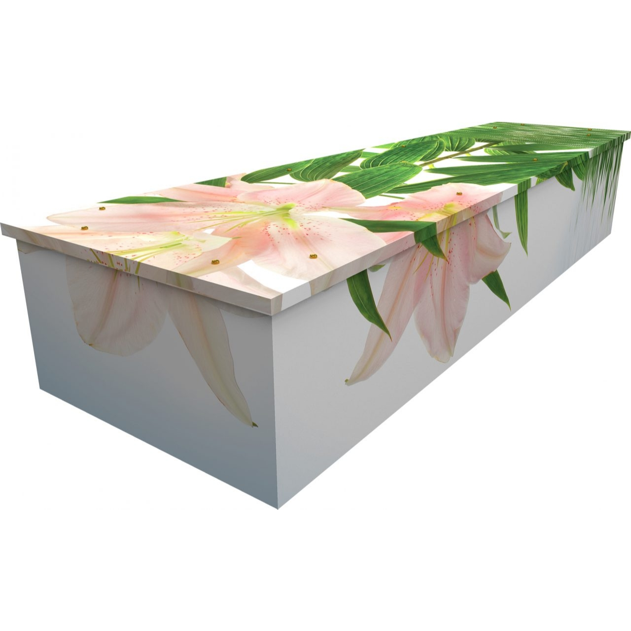 Lily Cardboard Coffin