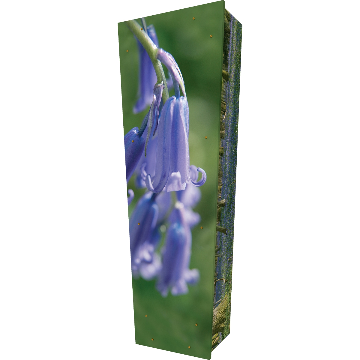 Bluebell Woods Coffin