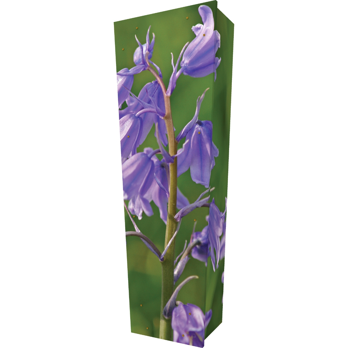 Bluebell Coffin