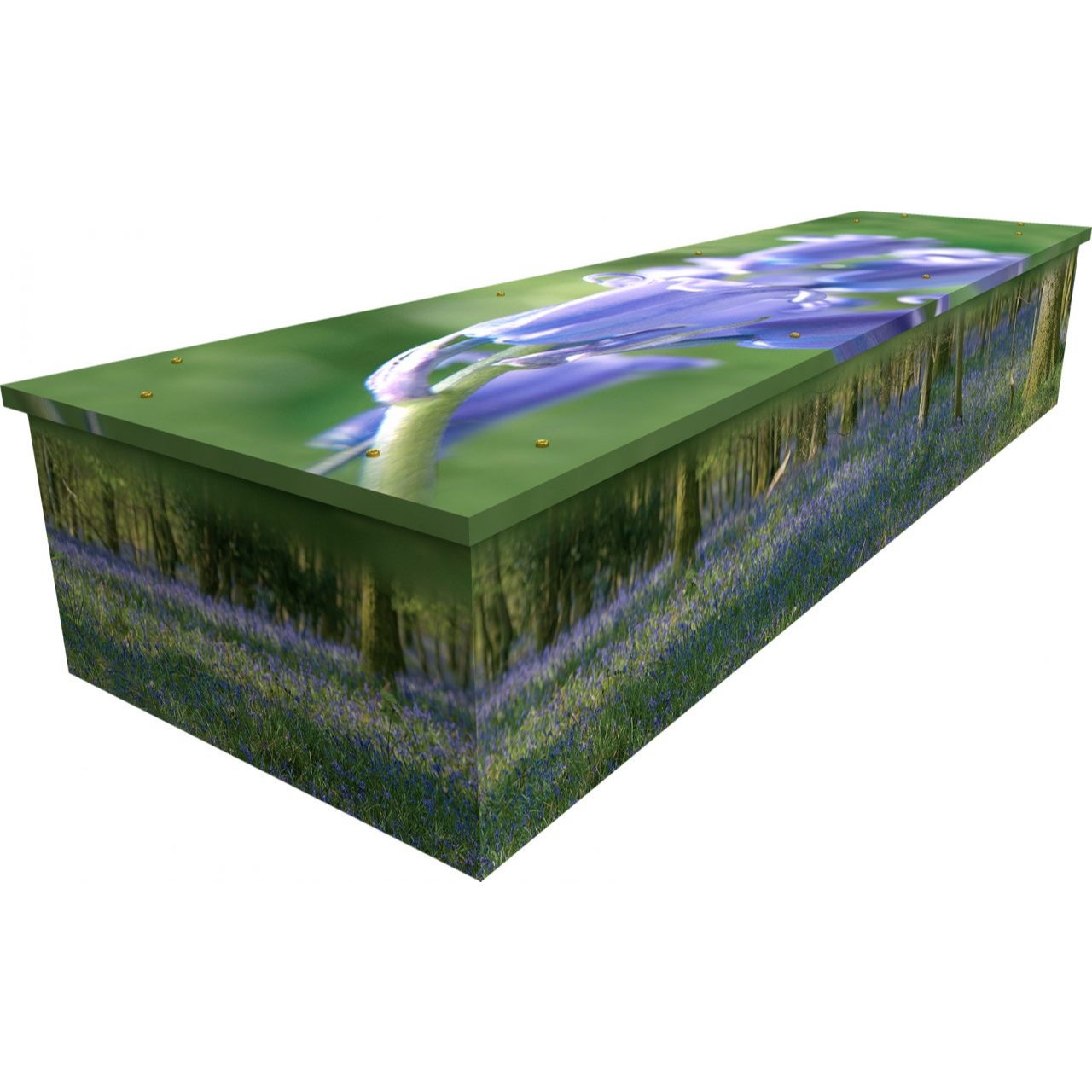 Bluebell Woods Cardboard Coffin
