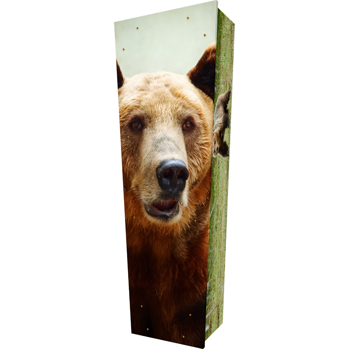 Bear Coffin