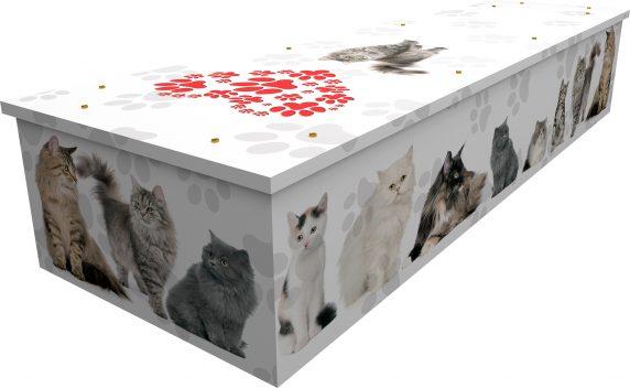 Cats Cardboard Coffin