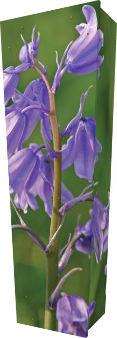 Bluebell Coffin - Standing
