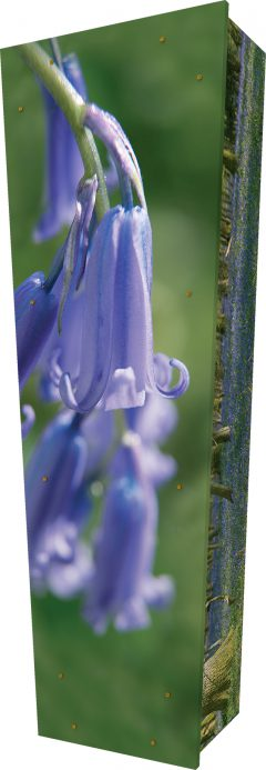 Bluebell Wood Coffin - Standing